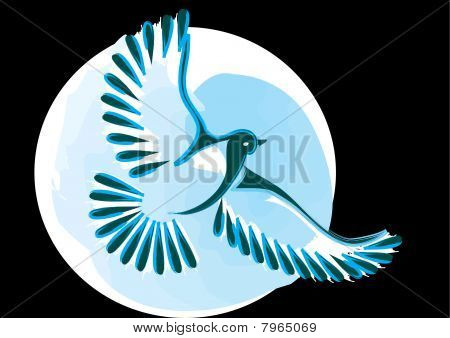 Dove or bird in flight