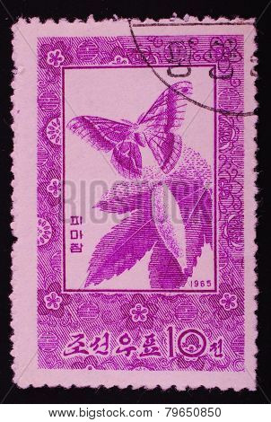 North Korea - Circa 1965: Postage Stamp Printed In North Korea Shows Image Of A Butterfly Flying Out