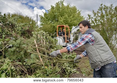 Removing a tree from a garden