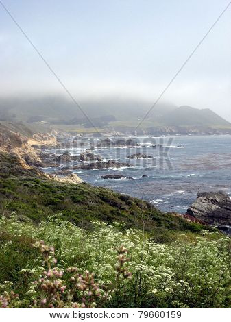 Scene From California Coast With Wildflowers