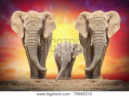 African elephant family on the road.