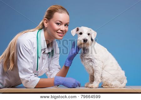 Cute little dog visits vet
