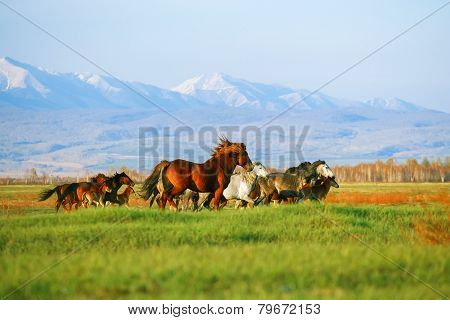 Mountains landscape with herd of horses