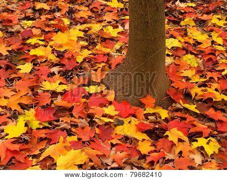 Illinois Autumn Forest Landscape