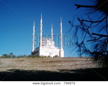 Mosque and Branches of Tree