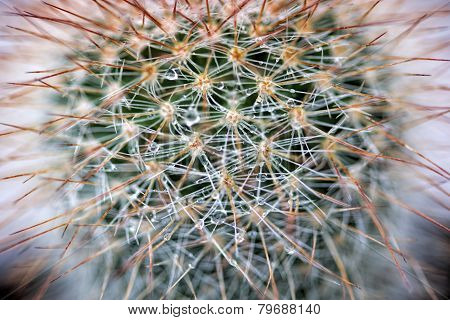 Abstract Cactus with Water Drops