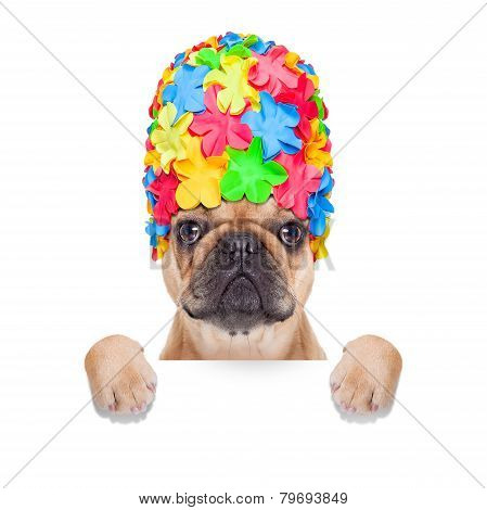 Swimming Cap Dog