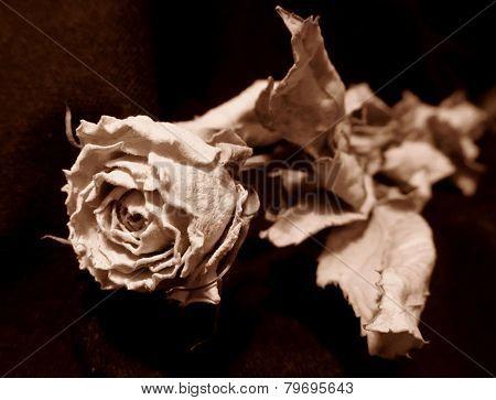 Sear rose