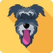 stock photo of schnauzer  - Vector dog Miniature Schnauzer breed icon flat design - JPG
