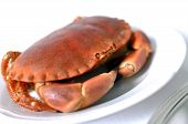 picture of cooked crab  - cooked crabs on white plate at restaurant  - JPG