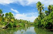stock photo of alleppey  - Coco trees reflection at back waters of Kerala India - JPG