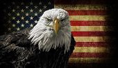 stock photo of battle  - a majestic Bald Eagle against a photo of a battle distressed American Flag - JPG