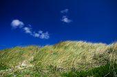 image of dune grass  - green dune grass and a blue sky - JPG