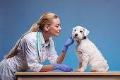 stock photo of vet  - We take the best care of your pets - JPG