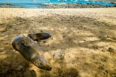 stock photo of sea lion  - sea lions resting on beach in san cristobal with ocean on background galapagos islands ecuador - JPG