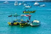 picture of marina  - floating boats in marina of san cristobal galapagos islands ecuador - JPG