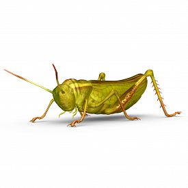 image of cricket shots  - The grasshopper is an insect of the suborder Caelifera in the order Orthoptera - JPG