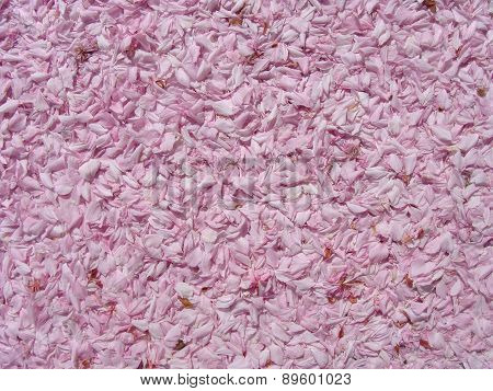 Blossom Petal Leaves In Pink Background