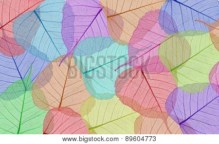 Decorative Colorful Skeleton Leaves Background