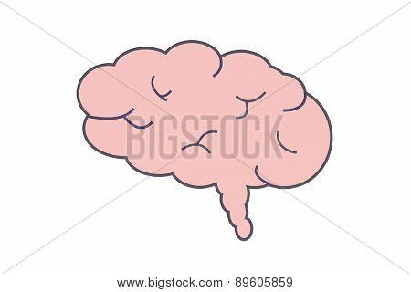 Sketched Human Brain Free Illustration