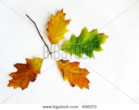 Branch