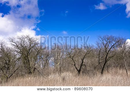 View from the old orchard on a background of blue sky with white clouds