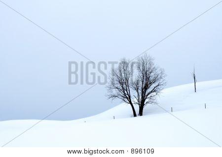 Overcast Winter Landscape