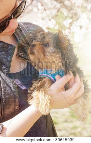 young woman holding a Yorkshire terrier puppy