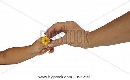 Child Giving Mother Flower