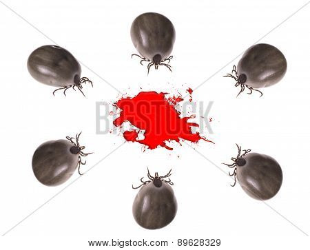 Group Of Ticks