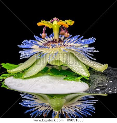 Spa Concept Of Stone Texture Symbol Yin Yang, Passiflora Flower And Twig Fern With Dew In Reflection