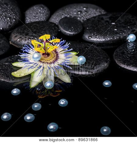 Spa Still Life Of Passiflora Flower On Zen Basalt Stones With Drops And Placer Pearl Beads In Reflec