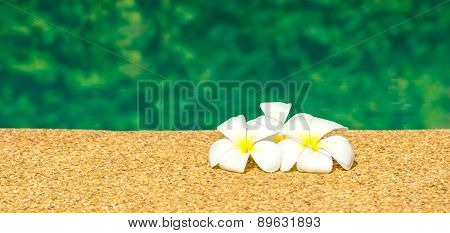 Beautiful Tropical Plumeria Flowers On Swimming Pool With Green Garden Reflection Water, Panorama
