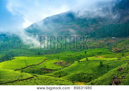 Green Tea Plantations With Fog Early In The Morning, Munnar, Kerala, Beautiful India Travel Backgrou