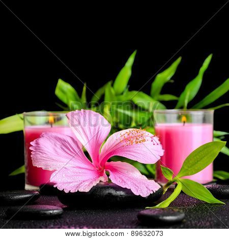 Beautiful Spa Still Life Of Pink Hibiscus Flower, Twig Bamboo And Pink Candle On Zen Basalt Stones W