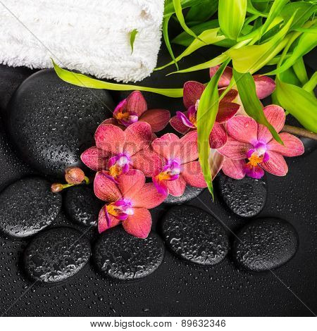 Top Down Spa Concept Of Blooming Twig Red Orchid Flower, Phalaenopsis, Bamboo With Dew And Towels On