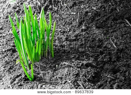 First Green Shoots Of Spring And Dirt