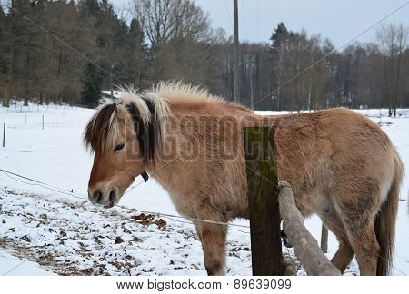 Brown Horse On Winter Pasture