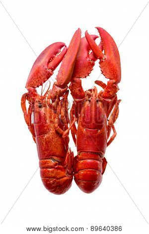 Two Red Lobsters Isolated On White Background