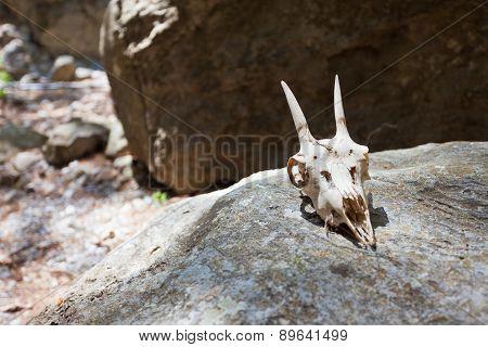 Skull of Samaria