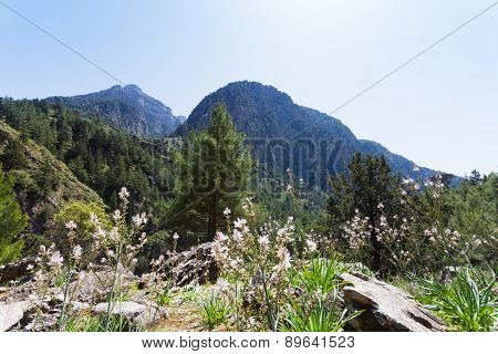 Mountains of Samaria