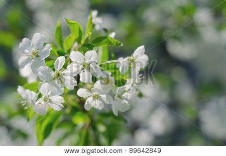 Inflorescence Flower