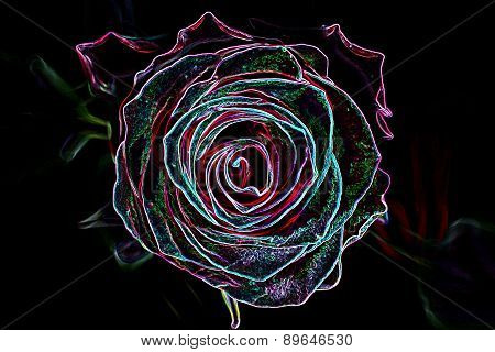 Abstract Background Made Of Rose Flower.
