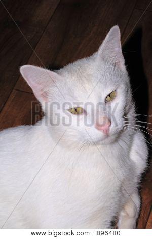 Albino Cat Portrait