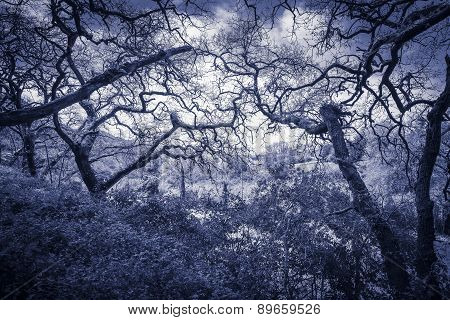 blue monochrome of a forest in Sintra, Lisboa