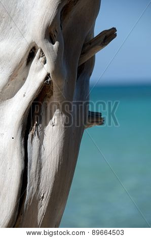 Bright White Dry Wood Trunk At Beach 69