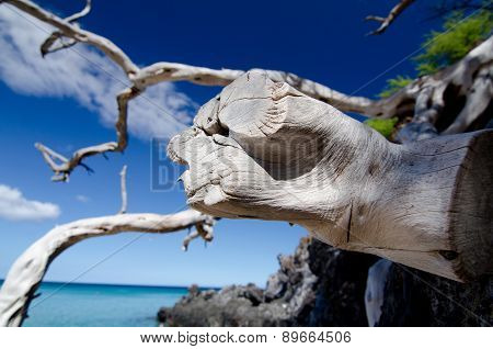 Web Of Dry Wood Branches Over Lava Rocks At Beach 69