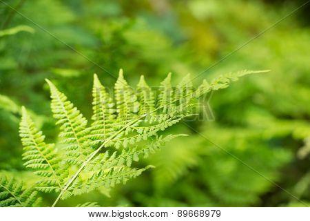 Detail Fern leaf in nature