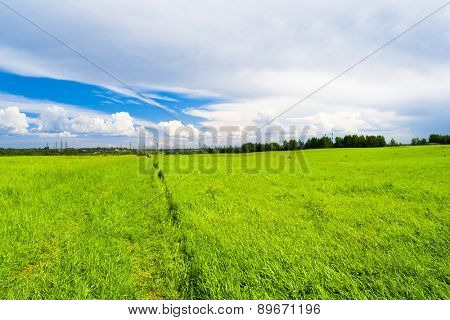 Grass Land Green Plain