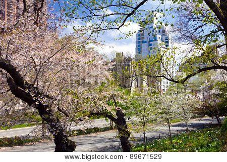 Central Park Path In Springtime